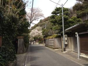 kamakura_spring